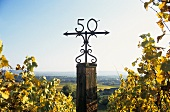 Schloss Johannisberg lies on the 50th parallel of latitude