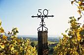 Am Schloss Johannisberg verläuft der 50. Breitengrad