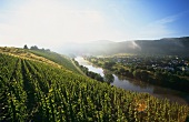 Vineyards on the Saar at Schoden, Germany