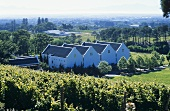 The Buitenverwachting Winery, Constantia, S. Africa