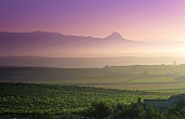Vineyards around village of Langurdia, Rioja Alvesa, Spain