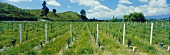 Neudorf Winery, Nelson, N. Zealand (Chardonnay wines)