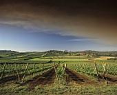 Heemskerk Winery, Pipers Brook, Tasmania