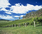 The Freycinet Winery in Tasmania