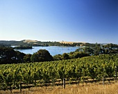 Stonyridge Winery on the island of Waiheke, N. Zealand