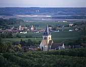 Wine village of Ville-Dommange, Montagne de Reims, France