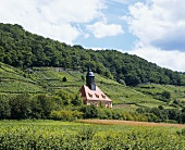 Church surrounded by vineyards at Dresden-Pillnitz
