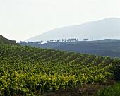 Senorio de Sarria Winery, Navarra, Spain