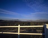 Vineyard, Kanu Vineyards, Stellenbosch, S. Africa