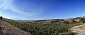 Wine-growing region in Swartland, S. Africa
