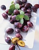Plums (Prunus domestica) variety 'Ortenauer'