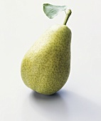 Pear (Pyrus communis), variety 'Dr. Guyot'