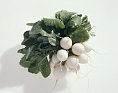 White radishes (Raphanus sativus var. sativus)