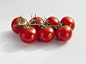 Tomatoes (Lycopersicon esculentum), variety 'Temptation'