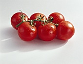 Tomatoes (Lycopersicon esculentum), variety 'Jamaica'