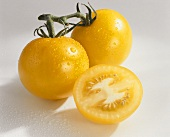 Yellow tomatoes, variety 'Locarno', with drops of water