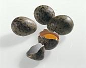 Raw seagull's eggs, one broken open
