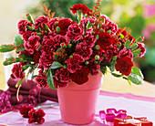 Nelken und Prachtspiere in rosafarbenem Topf