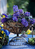 Glass bowl of hyacinths and ivy in a wire stand