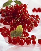 Redcurrants (Ribes rubrum), close-up