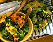 Cress salad with flowers & dandelion salad with mango