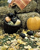Still Life of Pumpkins and Squash with Hay; Leaves