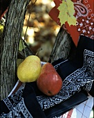 A Red and a Yellow Pear on a Bandana in the Woods