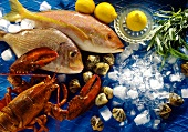 Seafood Still Life: Fish, Lobster and Shellfish