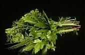 Posy of fresh herbs