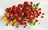 Various yellow and red tomato varieties