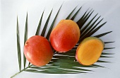 Three Mangoes on a Palm Leaf
