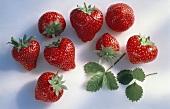 Acht einzelne Erdbeeren & zwei Blätter