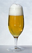 Light beer with head in beer glass