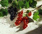 Red- and blackcurrants with branches