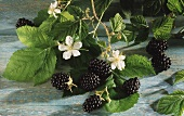 Blackberries with stalks and flowers