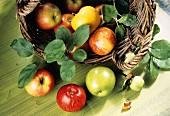 Verschiedene Apfelsorten in & neben Korb mit Blättern