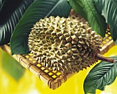 A Single Durian