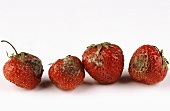 Four Moldy Strawberries