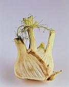 Rotten fennel