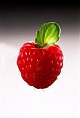A Single Raspberry