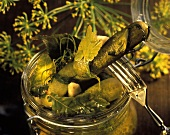 Pickled gherkins with herbs, leaves and horseradish