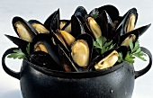 Steamed Mussels in an Iron Pot
