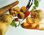Various types of root and tuberous vegetables