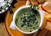 Grüne Kartoffelsuppe mit Kerbel in weisser Suppenschale