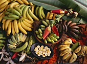 Banana still life with various types and banana flowers