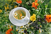 A cup of herb tea among fresh herbs