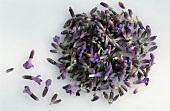 Lavender flowers on light background (Lavandula officinalis)