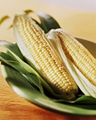 Two corncobs on green plate