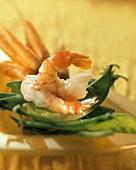 Peeled boiled shrimps on mangetouts; carrots