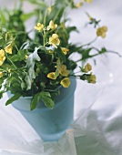Rocket with yellow flowers in a blue pot